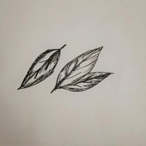 bay leaf illustration, bay leaf, food illustration, leaf illustration
