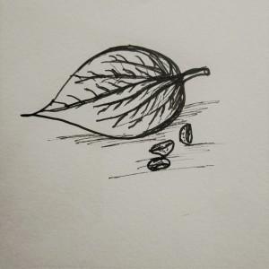Beetle leaves illustration, cookbook illustration, south indian food illustration