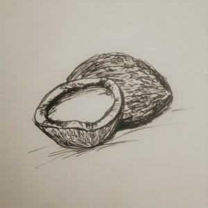 coconut illustration, food illustration